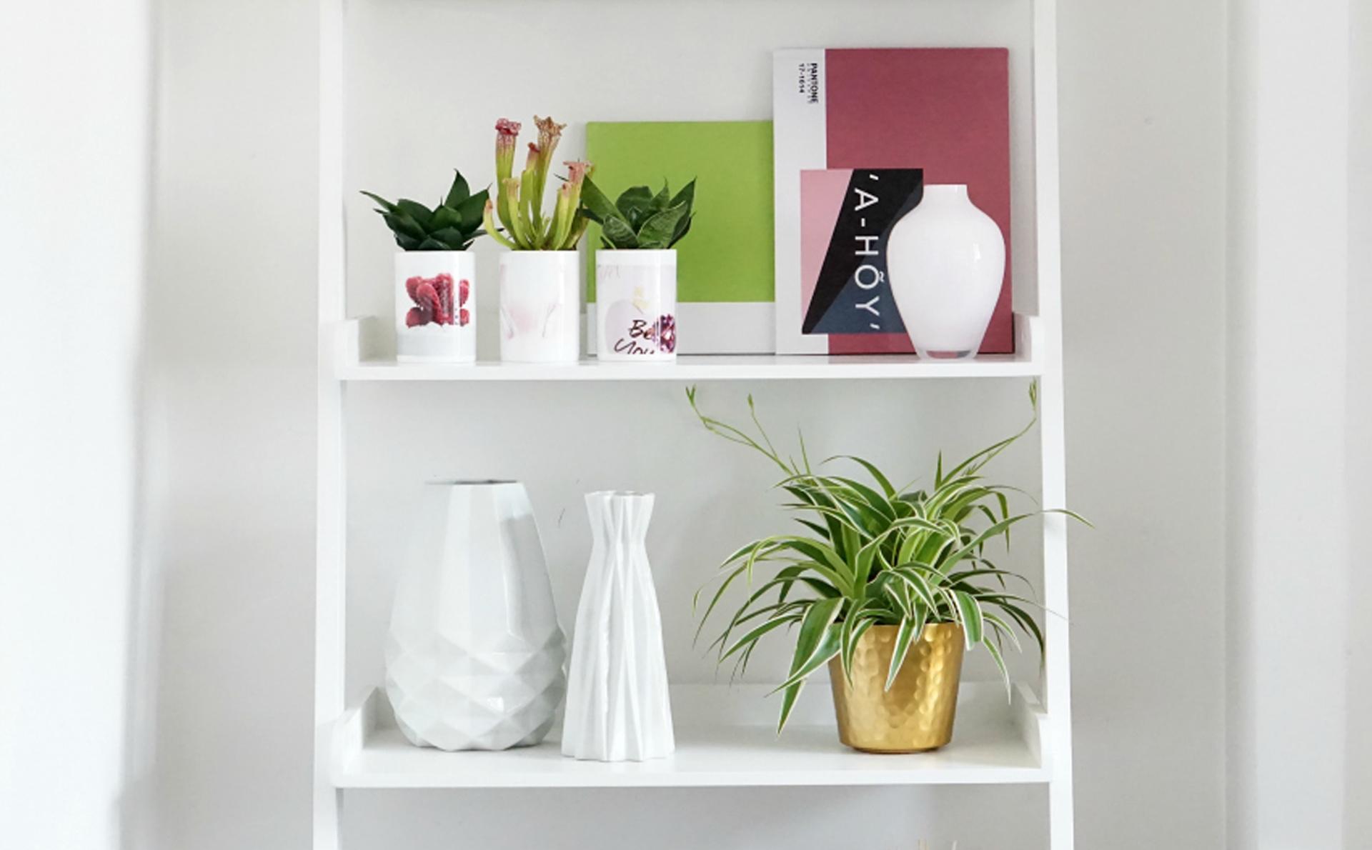 Tendance Shelfie étagère blanche avec plantes grasses et tasses porcelaine